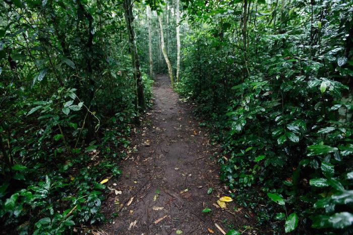 Days trips from Kampala – Mabira Forest – Prestige Hotel Suites – A Kampala  Hotel